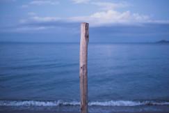 sea wood.jpg