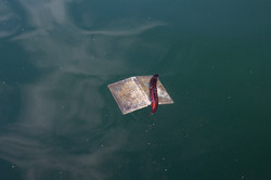 Found objects-Floating