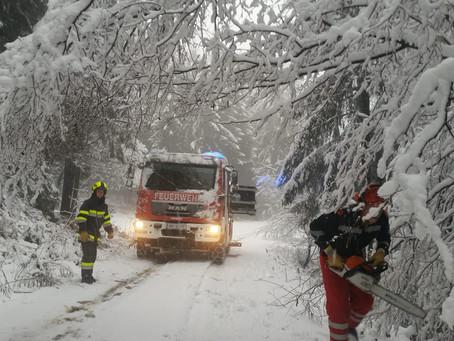Umgestürzte Bäume am Madereck