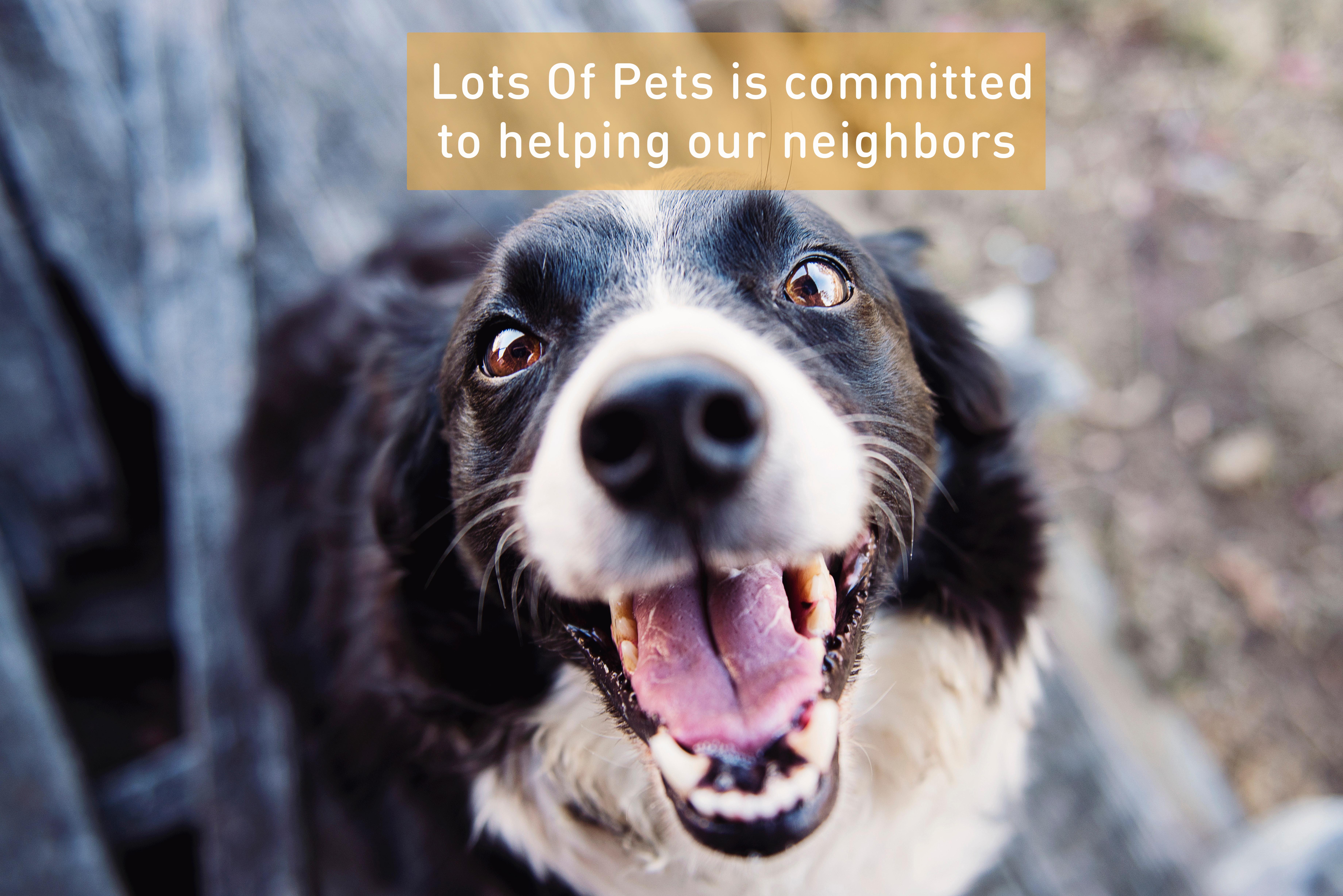 help neighbors