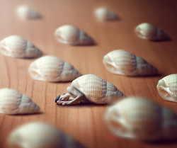 My own shell