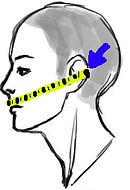 head drawing for measure.jpg
