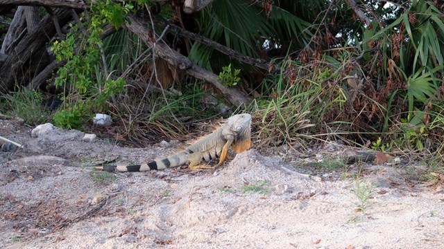 Key West und die Everglades