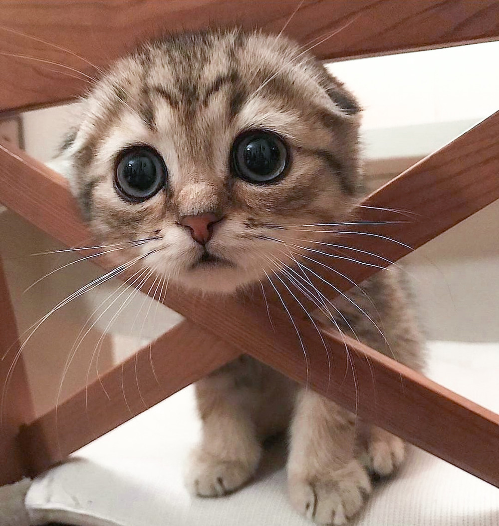 Cute Kitten - Edited Photo