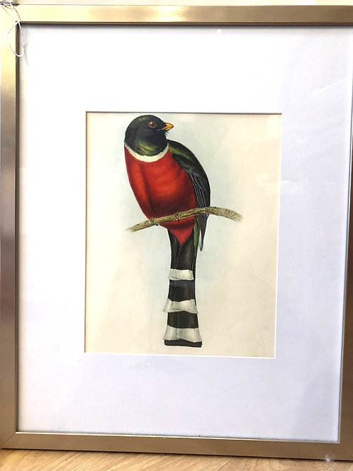 Pair, Framed Vintage Australian Bird Lithographs