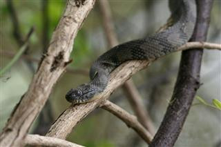 Why You May Be Dreaming About Snakes Right Now