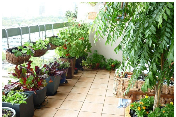 Gardening a great Stress buster!!!