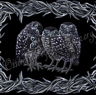 Burrowing Owls Watermark.jpg