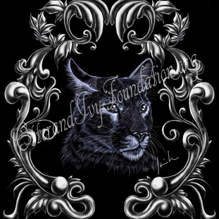 Puma concolor Watermark.jpg
