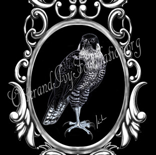 Peregrine Watermark.jpg