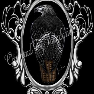 Red Tailed Hawk Watermark.jpg