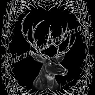 Mule Deer Stag Watermark.jpg