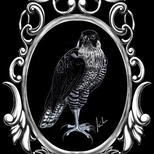 Peregrine Falcon Mens T-Shirt