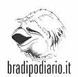 bradipo.png