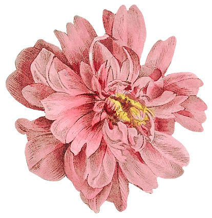 camelia2_edited.png