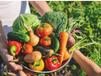 18 de junio Día de la Gastronomía Sostenible