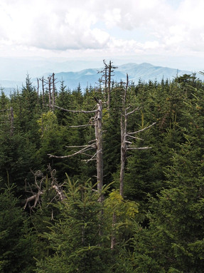 Highest Peak in Tennessee
