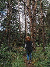 Forest in Scotland