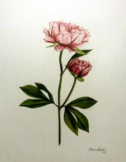 Rose Petals for Olivia