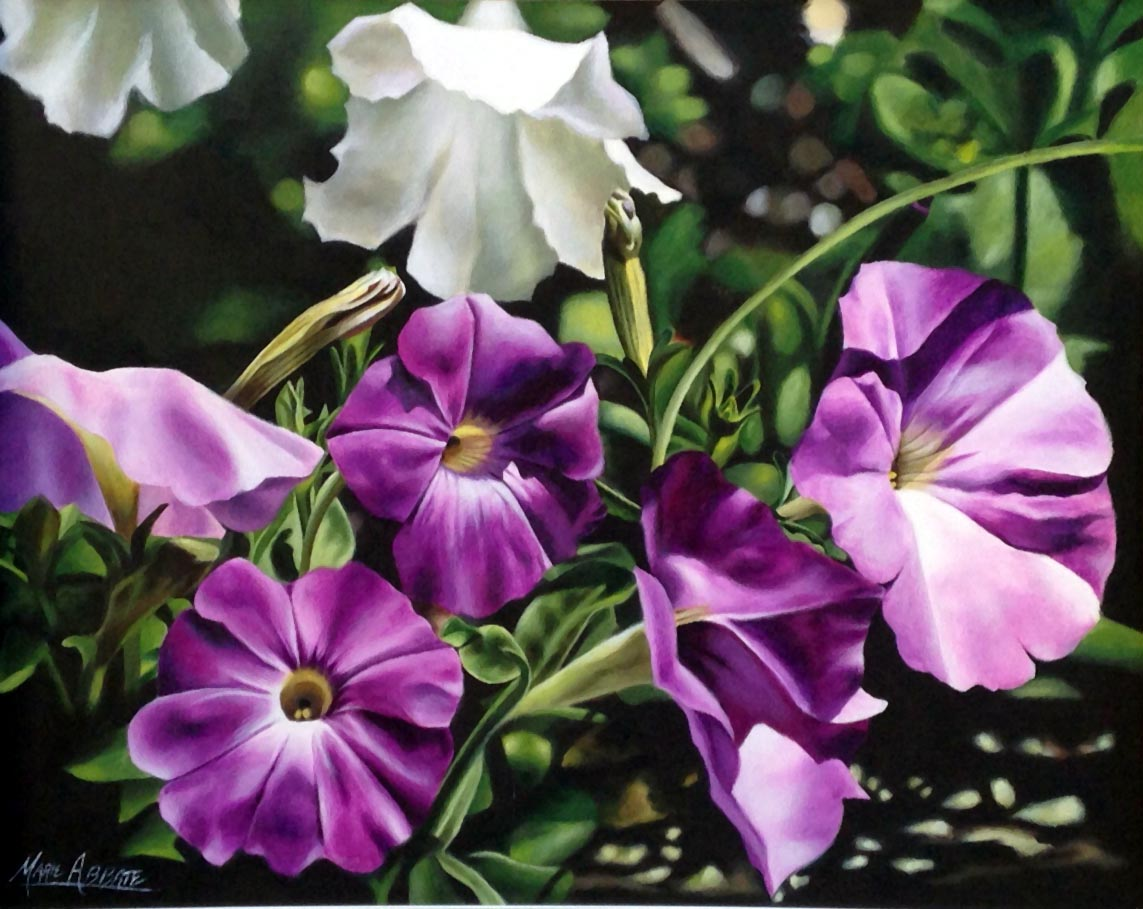 Petunias in May