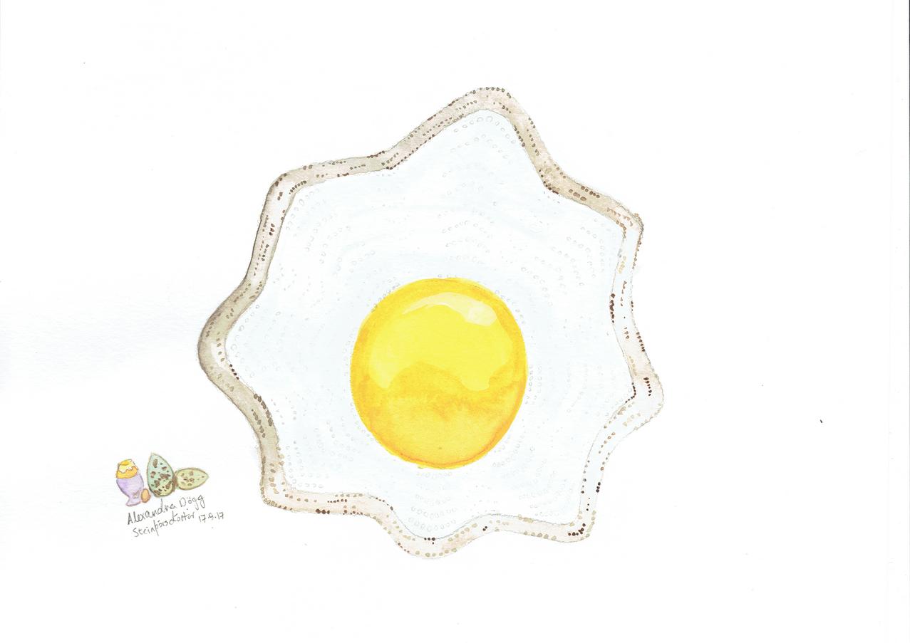 Egg Shawl