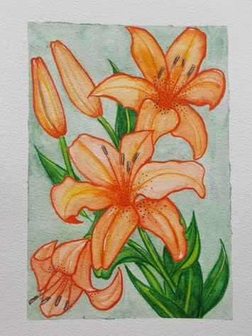 Liljur