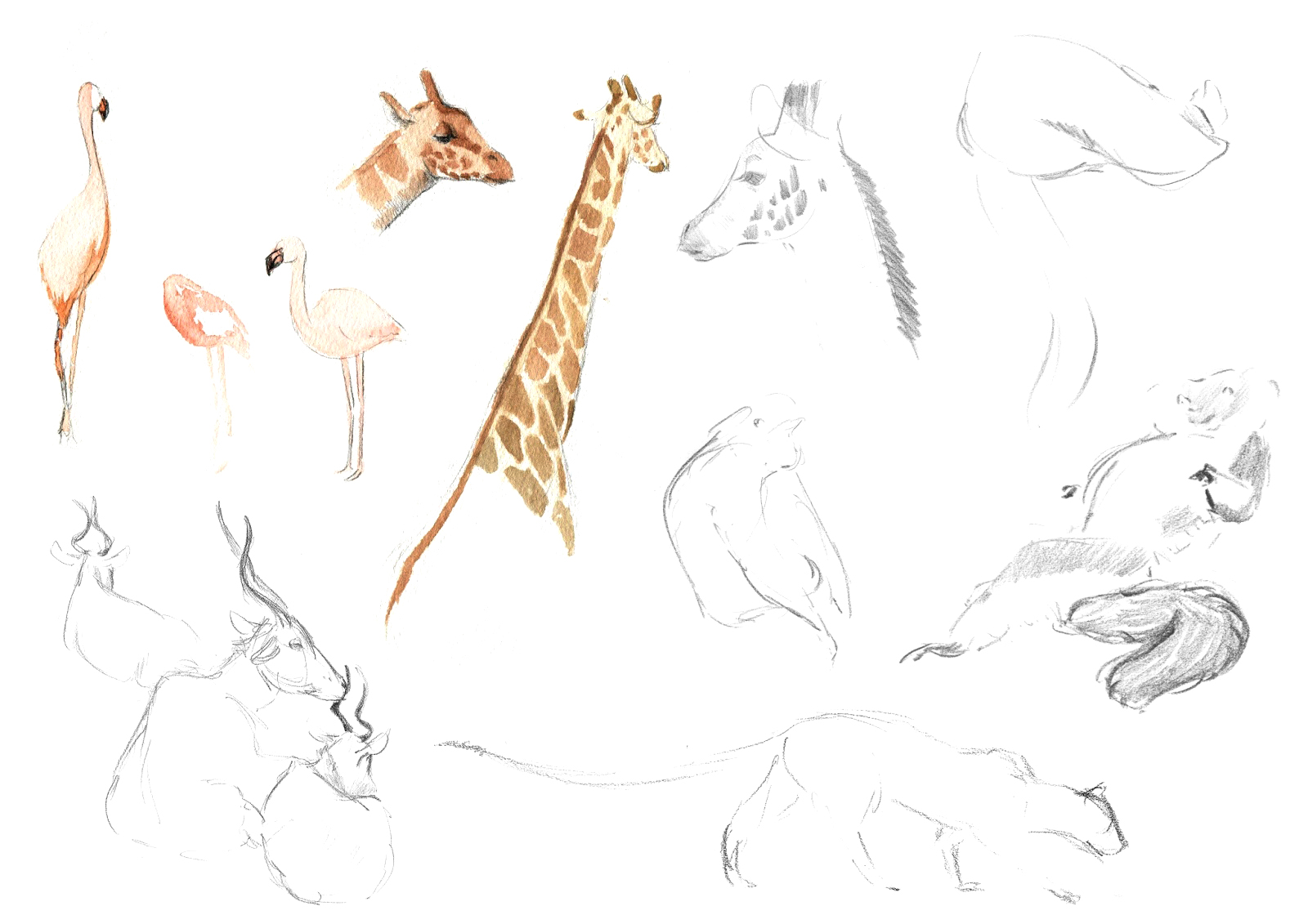 animal_sketches