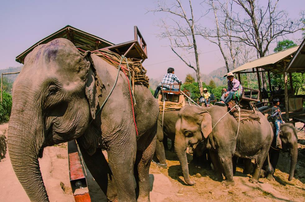 Misstreatment of Elephants