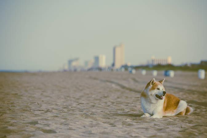 Beach Edition Aus