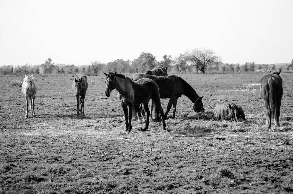 A-Symmetrical Horses