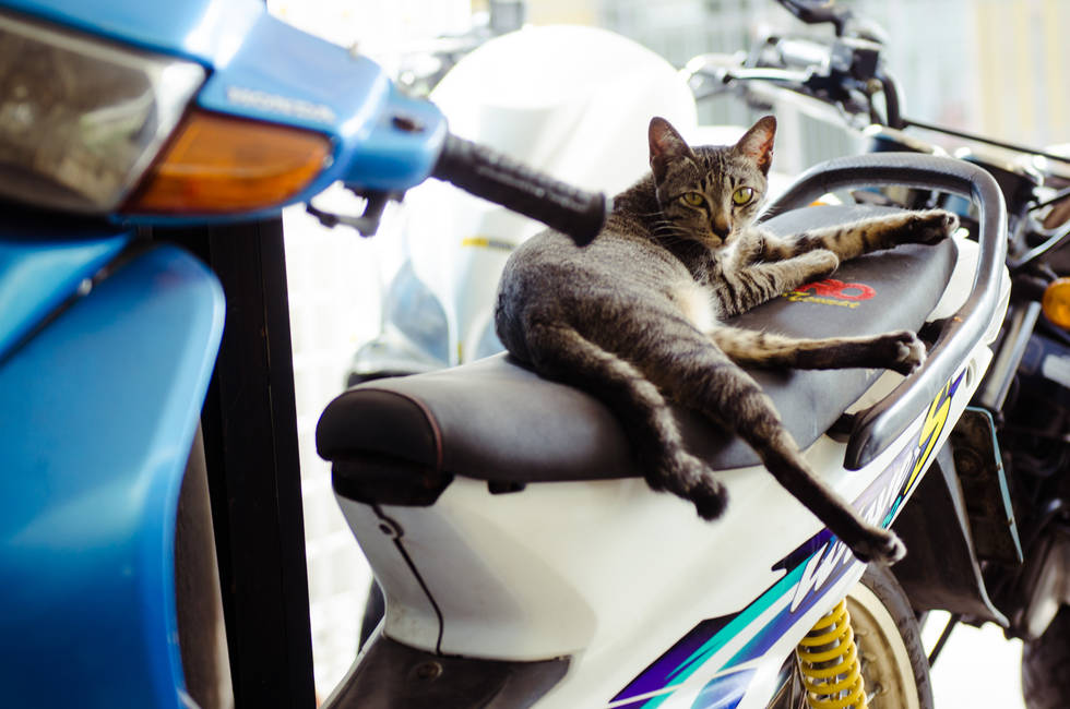 Scooter Kitty, Thailand