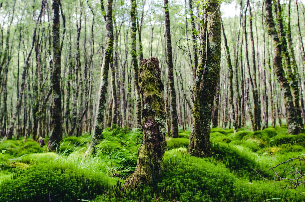 Faerie Forest In Glendalough, Ireland