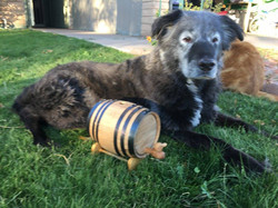 Old Timer with Barrel
