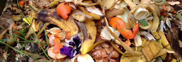 Food Waste Compost Rotting