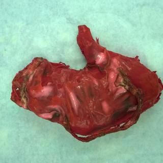 Latex organ