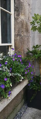 Window Boxes/ Exterior Plants