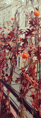 Large Autumn Display