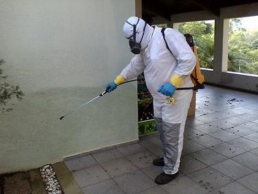 Dedetização de baratas e insetos rasterios