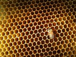 alvéole-abeille-4.jpg