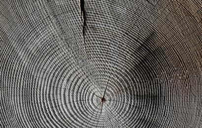 wood-618673.jpg