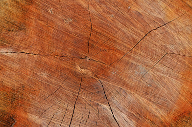 tree-2173755.jpg