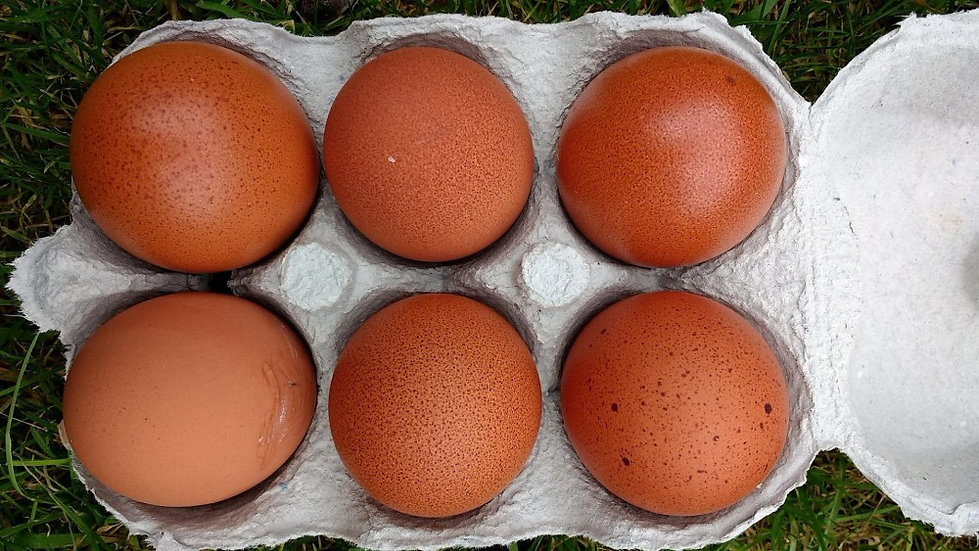 Morgans Welsh free range eggs - half dozen