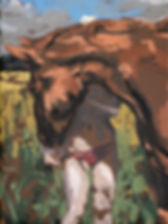 paard met rood broekje -Karel Vaes- copyright Maartje Elants
