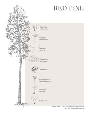 Tree-Fungi associations_Page_1.jpg