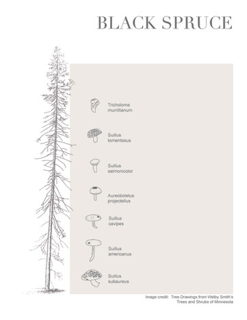 Tree-Fungi associations_Page_4.jpg