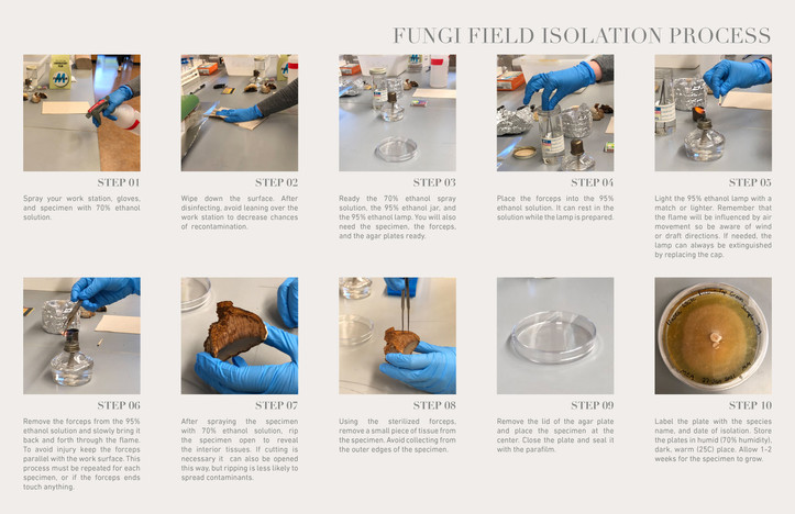 Fungi Field Isolation Process.jpg