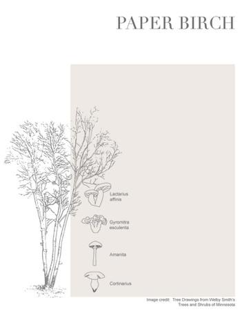 Tree-Fungi associations_Page_3.jpg