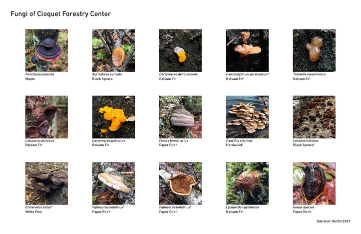 CFC_Fungi.jpg