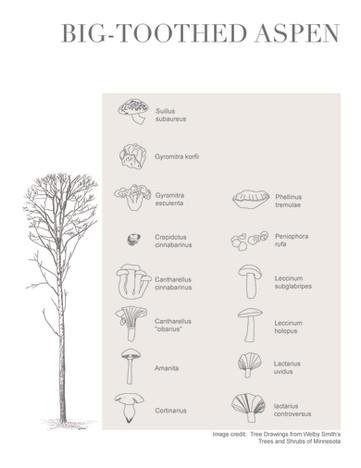Tree-Fungi associations_Page_6.jpg