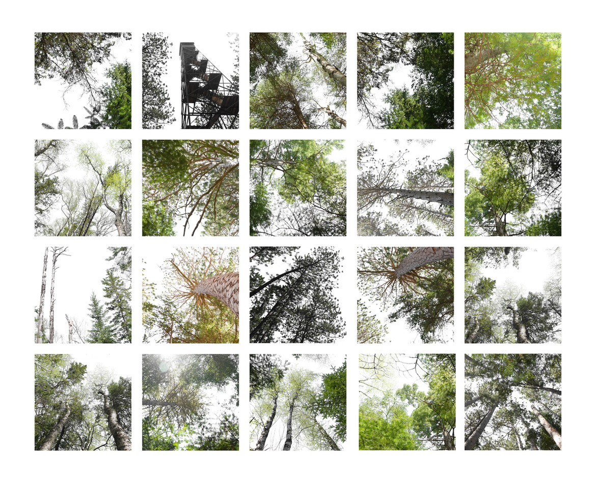 Old Growth Canopy Studies